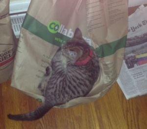 cat sleeping on bag